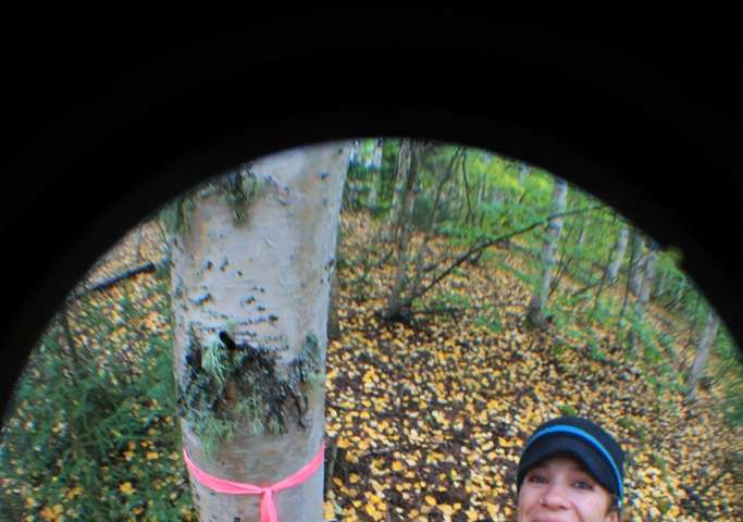 Trees' surprising role in the boreal water cycle quantified