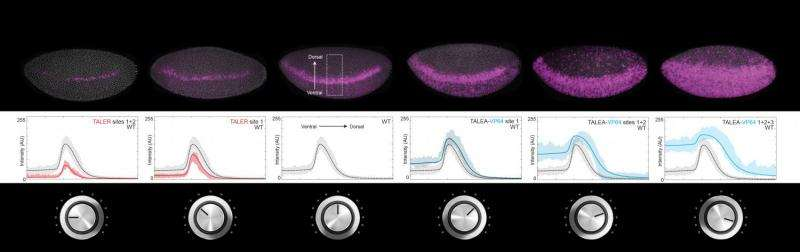 Turning the volume of gene expression up and down