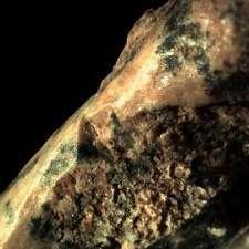 Turtle soup, perchance? Prehistoric man had a penchant for tortoises