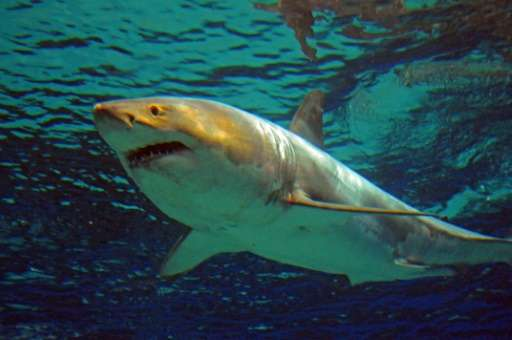 Twenty-two unprovoked shark attacks were recorded in Australian coastal waters in 2015, with only one fatality