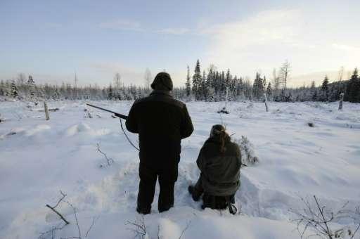 Two hunters attend a wolf hunt on January 2, 2010 near Kristinehamn, Sweden