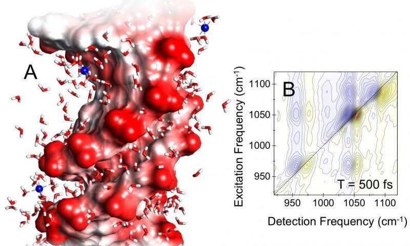 Ultrastrong, ultrafast and local—water induces electric fields at the surface of DNA