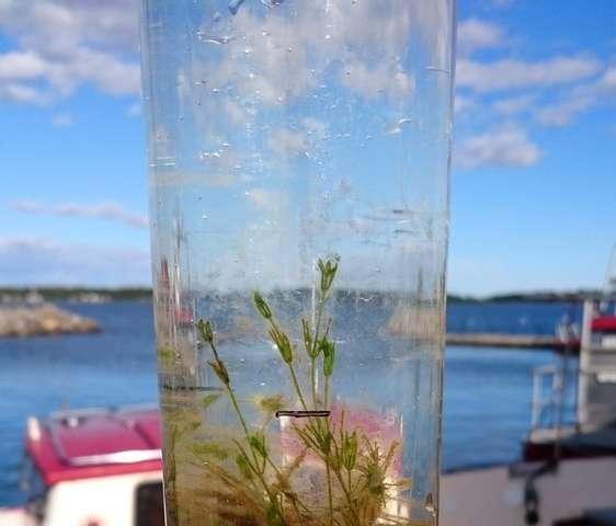 Underestimated algae production on shallow bottoms
