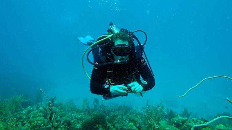 Underwater soundscape may offer clues to coral health and aid reef conservation