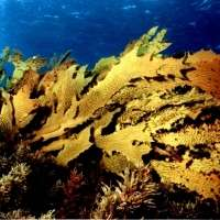 Urgent changes needed to stem tide of damage to marine ecosystems