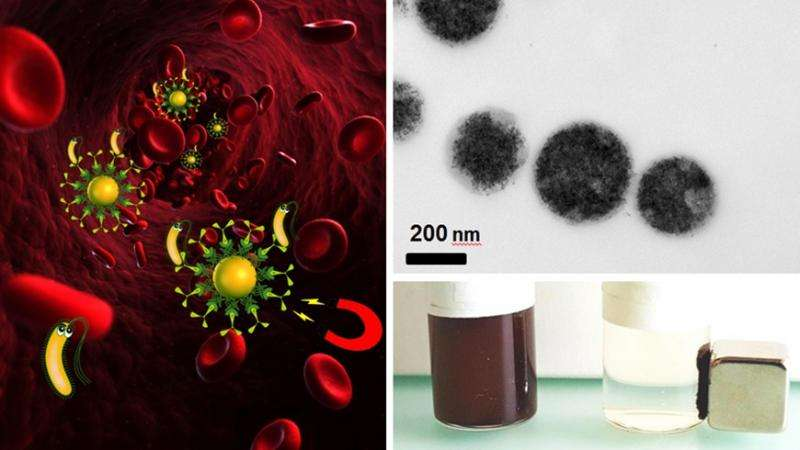 Using magnets instead of antibiotics as a new treatment method for blood infection