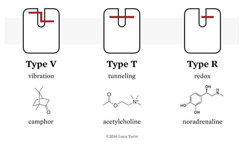 Using the 'deuterium switch' to understand how receptors work