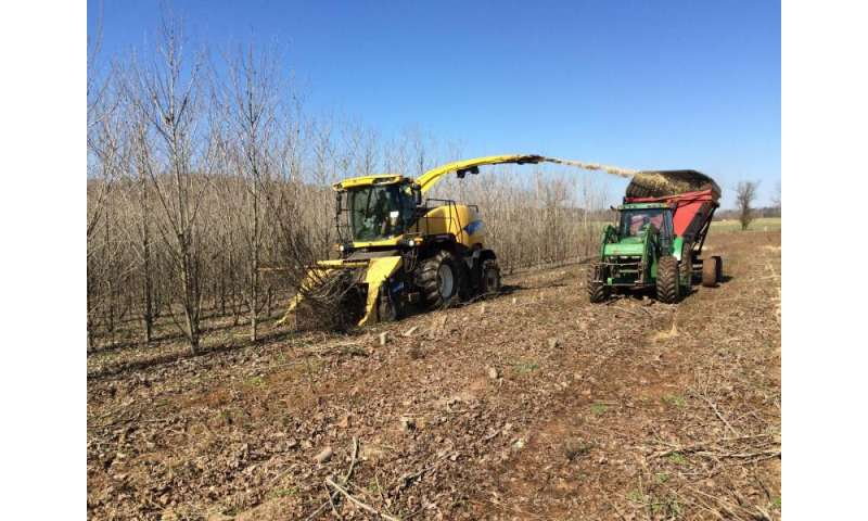 UT and Genera Energy harvest hybrid poplar stand in next step toward a biobased economy