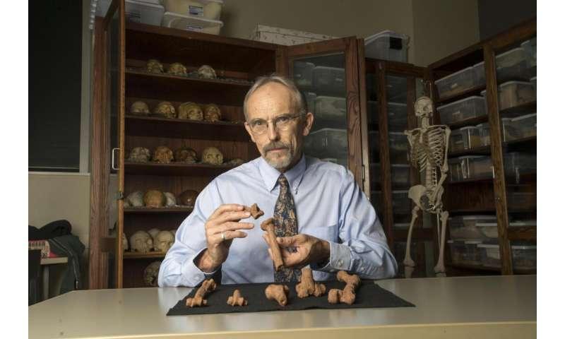 UT study cracks coldest case: How the most famous human ancestor died