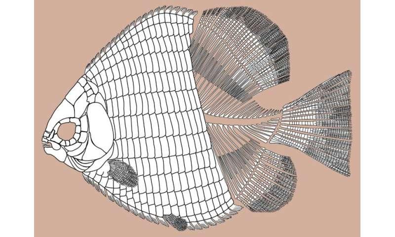 Veggievore fish of the Triassic