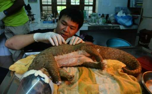 Vietnamese conservationists are fighting to save the scaly creatures from extinction
