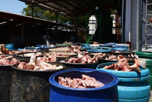 View of animal bones to be processed in the biodigestor at Del Valle slaughterhouse in Belen, Costa Rica