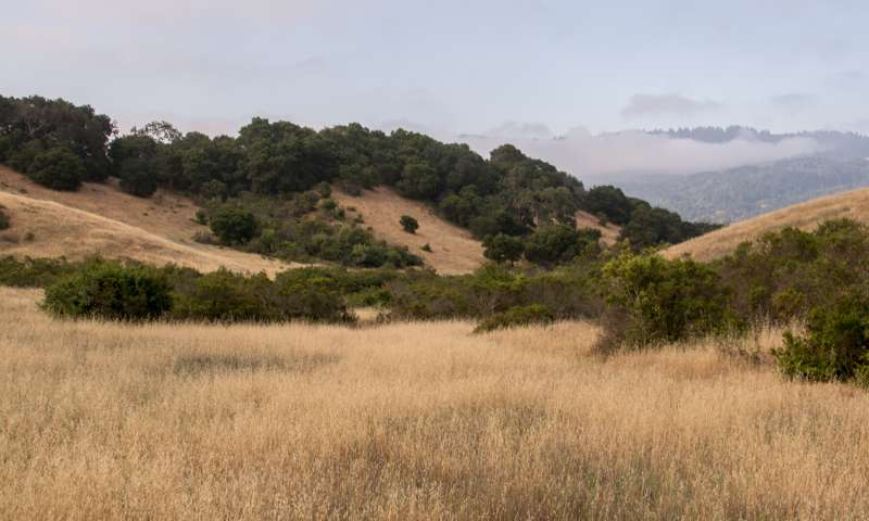Warmer, wetter climate would impair California grasslands