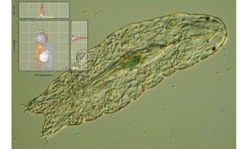 Water bears do not have extensive foreign DNA, new study finds