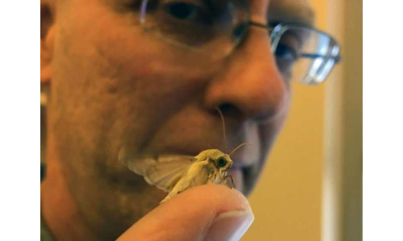 What a moth's nose knows