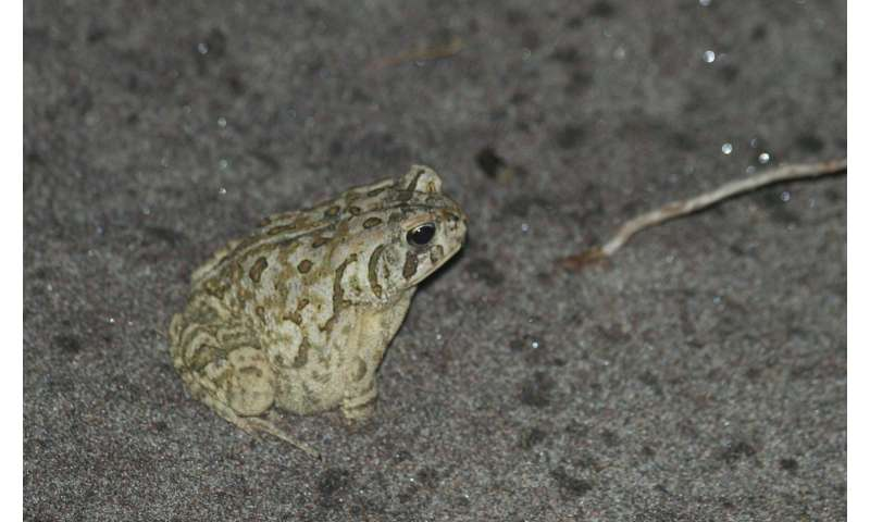 What hibernating toads tell us about climate