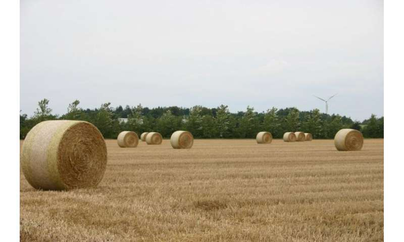 Which cropping system is best for the environment?