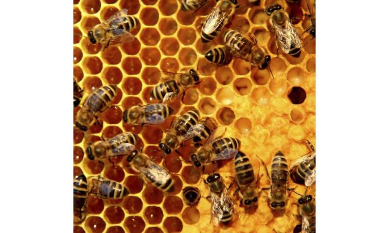 Why Brexit could be bad news for bees