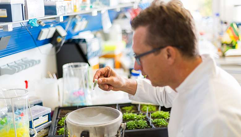 Why genome editing offers a targeted way of breeding better crops