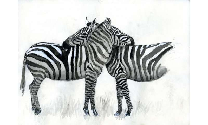 Wildlife Biologist Earns His 'Zebra Stripes' With New Book