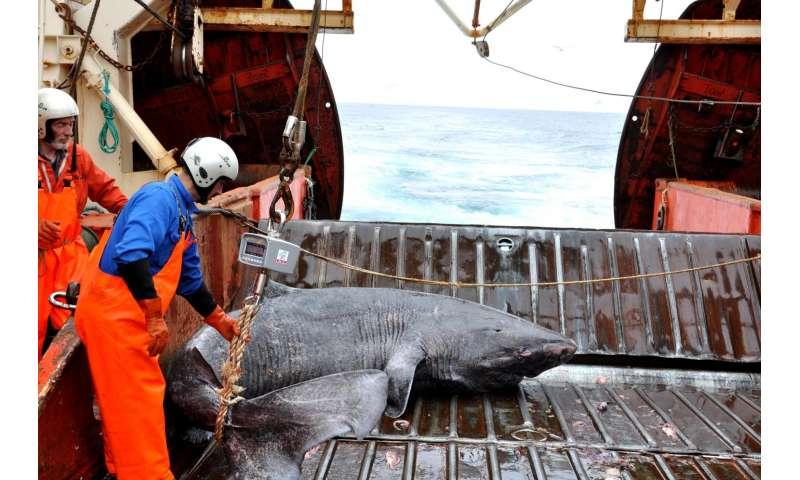 Winner of the longest-lived vertebrate award goes to...