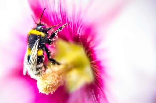 Worker bees—always female—focus selflessly on foraging, taking care of the brood, nest-keeping and maintaining defences against