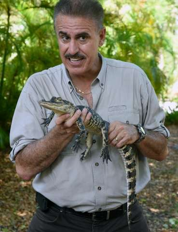 Zoo Miami communications director Ron Magill holds a juvenile American Alligator