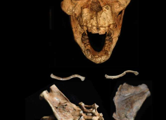 33 Million Year Old Fossil Reveals Origins Of The Human Spine