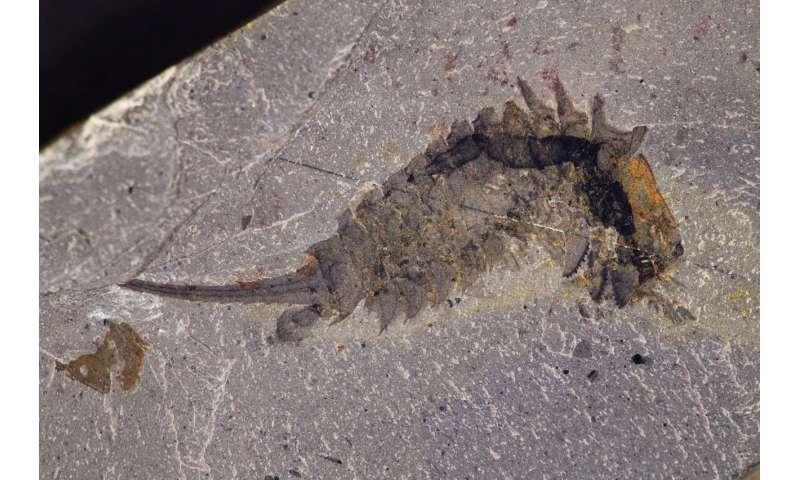 A 508-million-year-old sea predator with a 'jackknife' head