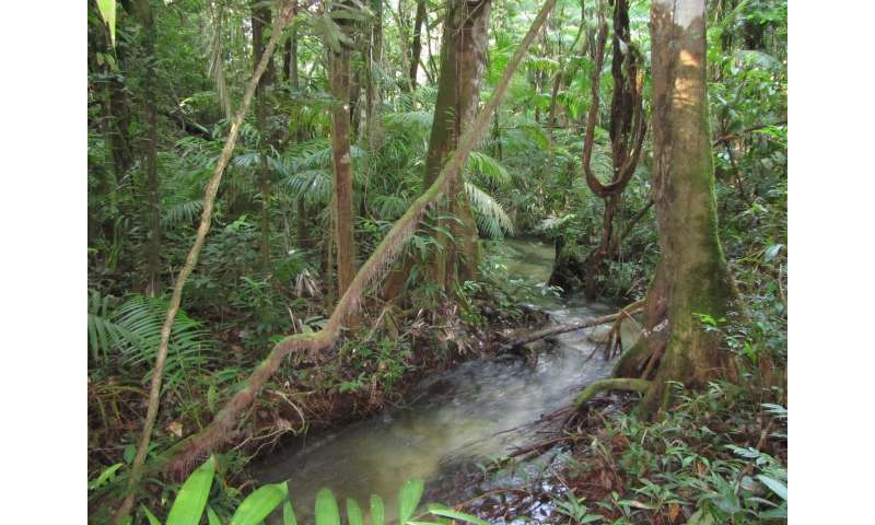 Amazonian streams found teeming with fish species are lacking protection