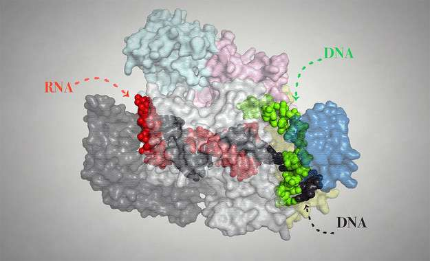 A new molecular scissors act like a GPS to improve genome editing