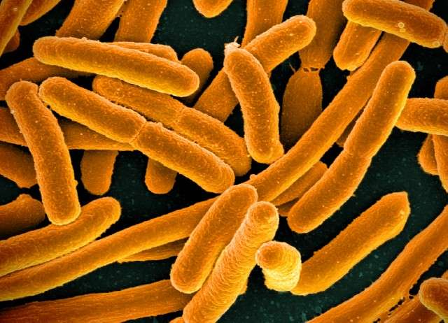 A simple bacteria reveals how stress drives evolution