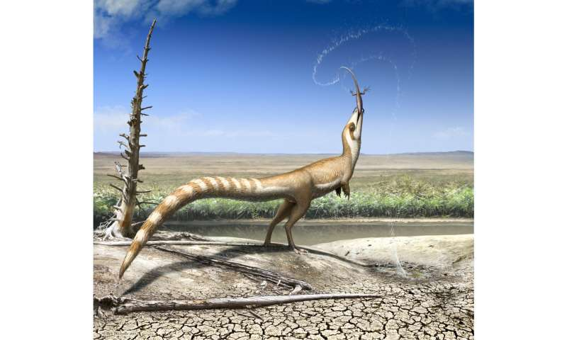 'Bandit-masked' feathered dinosaur hid from predators using multiple types of camouflage
