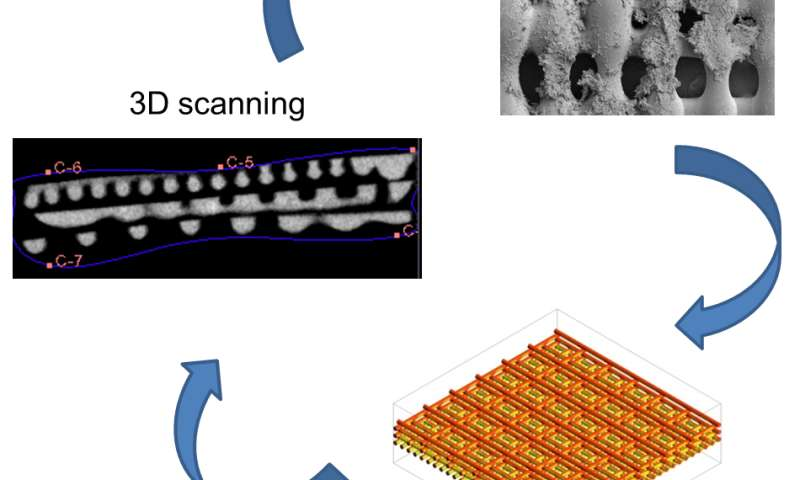Better scaffolds help scientists study cancer