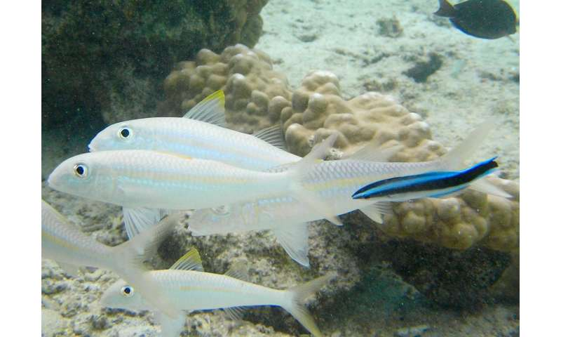 Boat noise disrupts fish cooperation