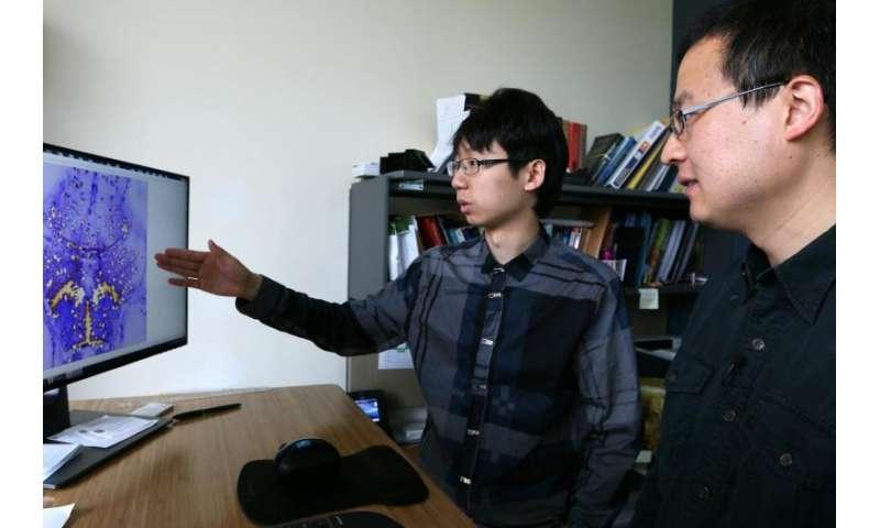 Brain-imaging system uses 'multi-pupil' prism arrays