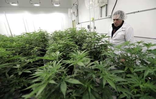 Cautious Texas among last states to OK medical marijuana