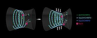Chromosome mechanics guide nuclear assembly