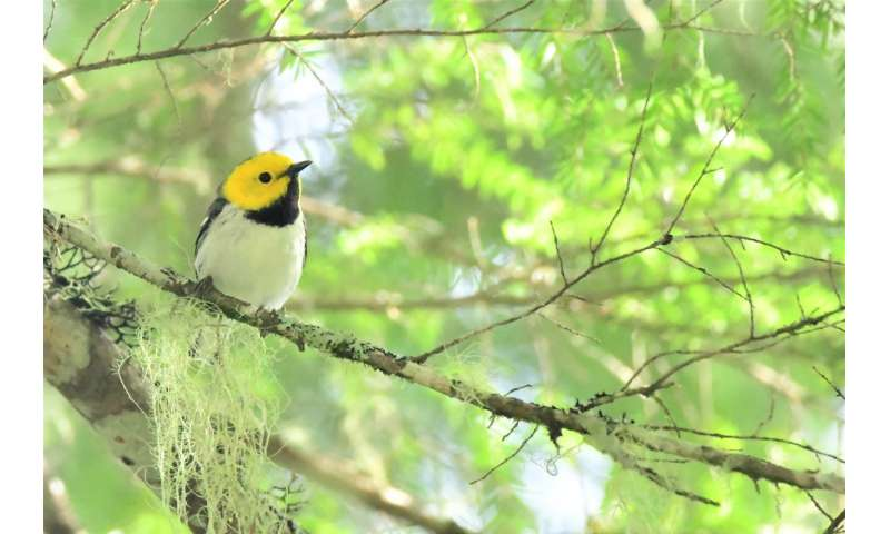 Complex, old-growth forests may protect some bird species in a warming climate