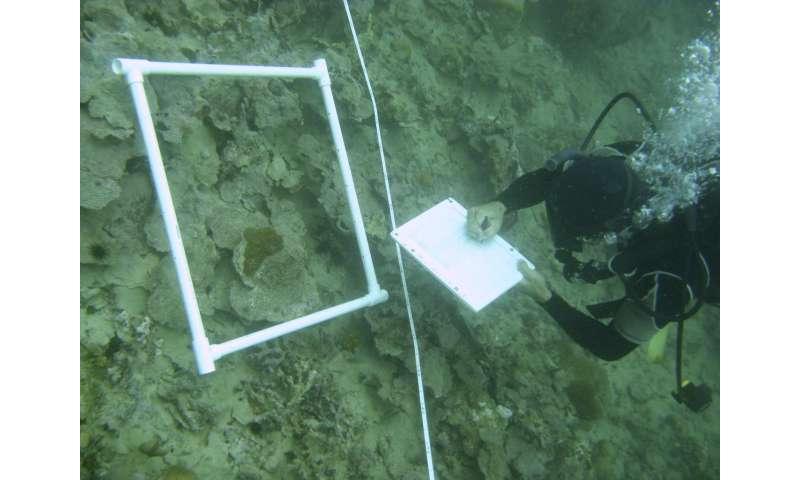 Dead zones may threaten coral reefs worldwide