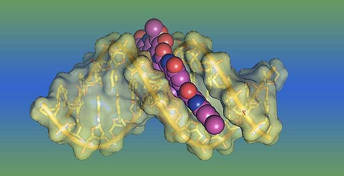 Deciphering potent DNA toxin's secrets