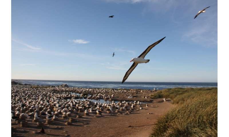 DNA tests on albatross poo reveal secret diet of top predator