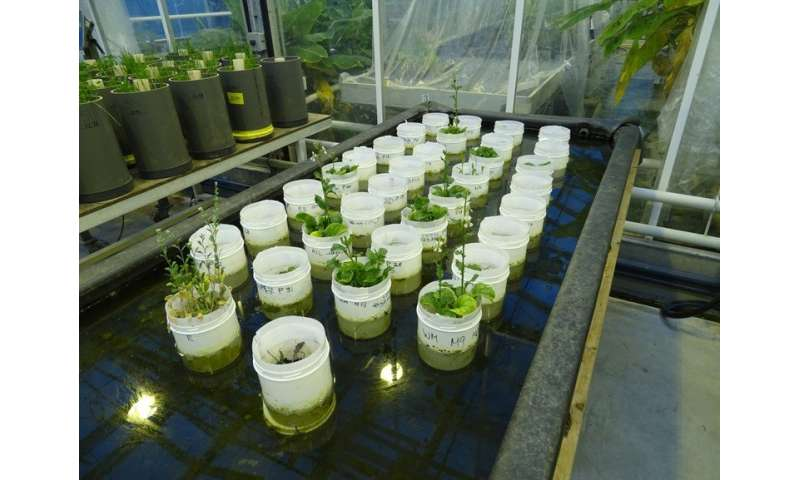 Earthworms can reproduce in Mars soil simulant