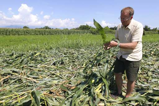 European court sides with Italian farmer pushing GM crops