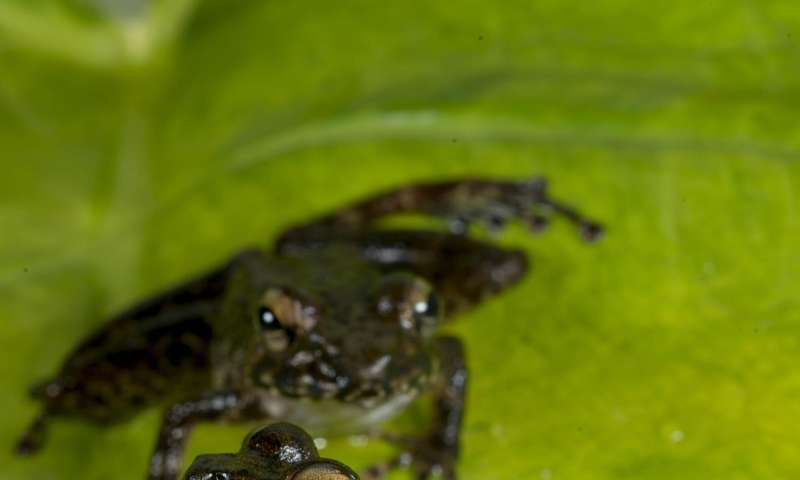 Extinction event that wiped out dinosaurs cleared way for frogs