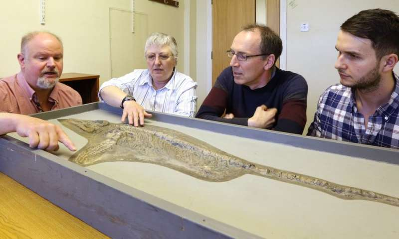 'Fake fin' discovery reveals new ichthyosaur species