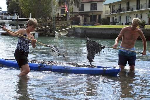 Farm runoff and the worsening algae plague