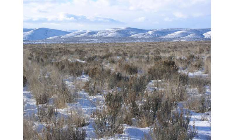 Federally subsidized shrubs, grasses crucial to sage grouse survival in Washington