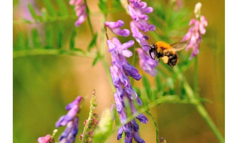 Flower-rich habitats increase survival of bumblebee families