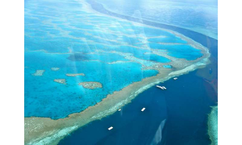 Global 'community' rallies for the Reef